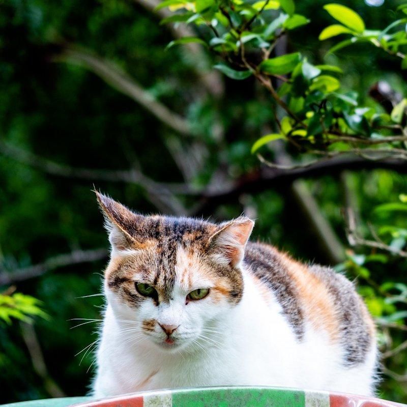 kyoto_cat