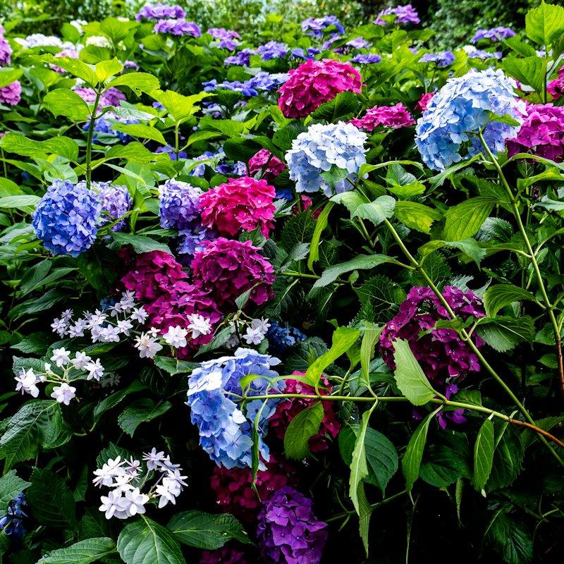 kyoto_flower