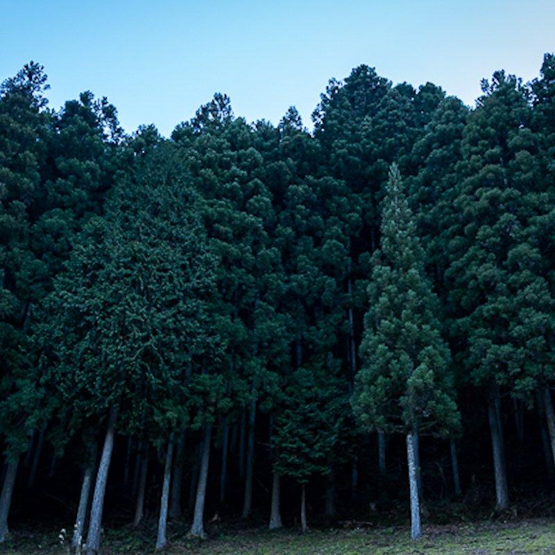 shikoku_landscape